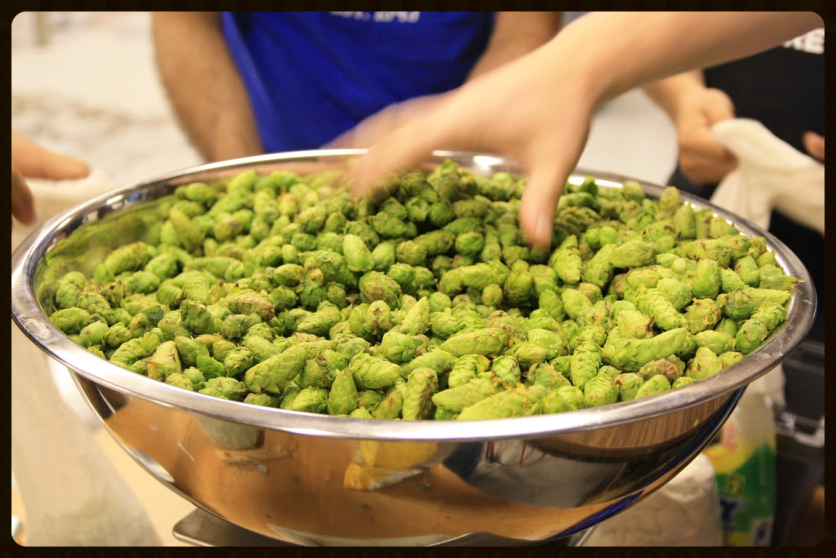 Cascade Hops for Dominion City's Land is Strong Wet Hopped Belgian IPA